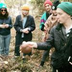 Zbierać grzyby